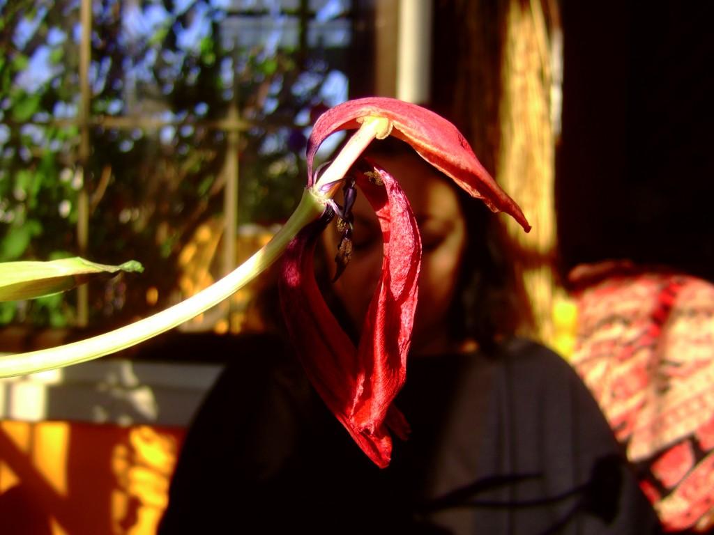 זהבה עם פרח בבית, 2005